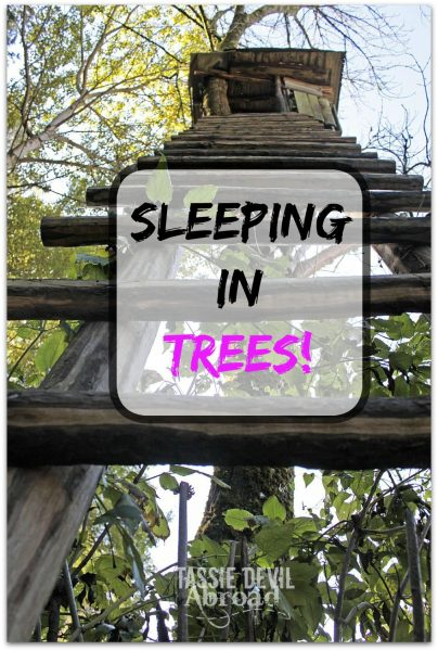 Sleeping in Trees - Treehouse Accommodation!