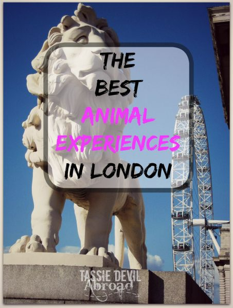 The Best Animal Experiences in London!
