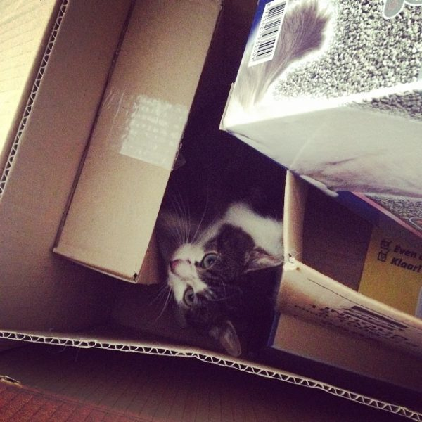 feral in boxes