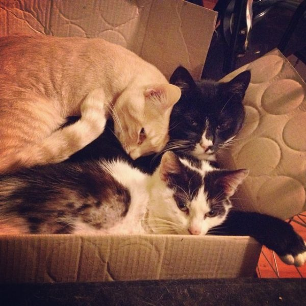 three cats in a box
