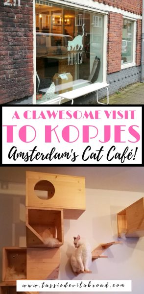 What it's like to visit Kopjes, the Amsterdam cat café! #amsterdam #travel #catcafe