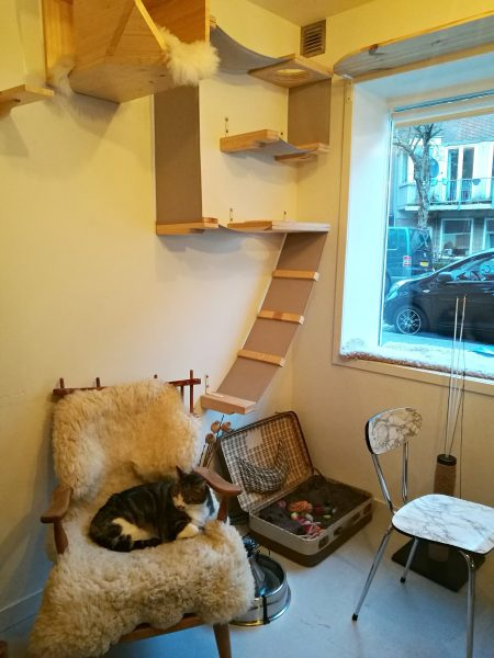 Kopjes, the Amsterdam Cat Cafe