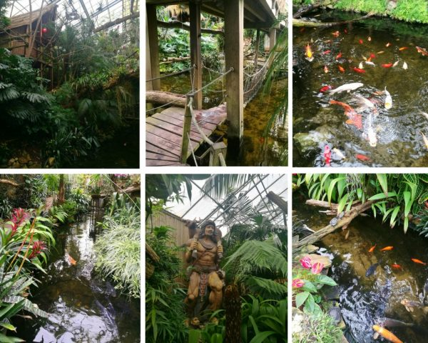 Tips for visiting and beautiful photos from De Orchideeën Hoeve, a tropical paradise in the Netherlands!