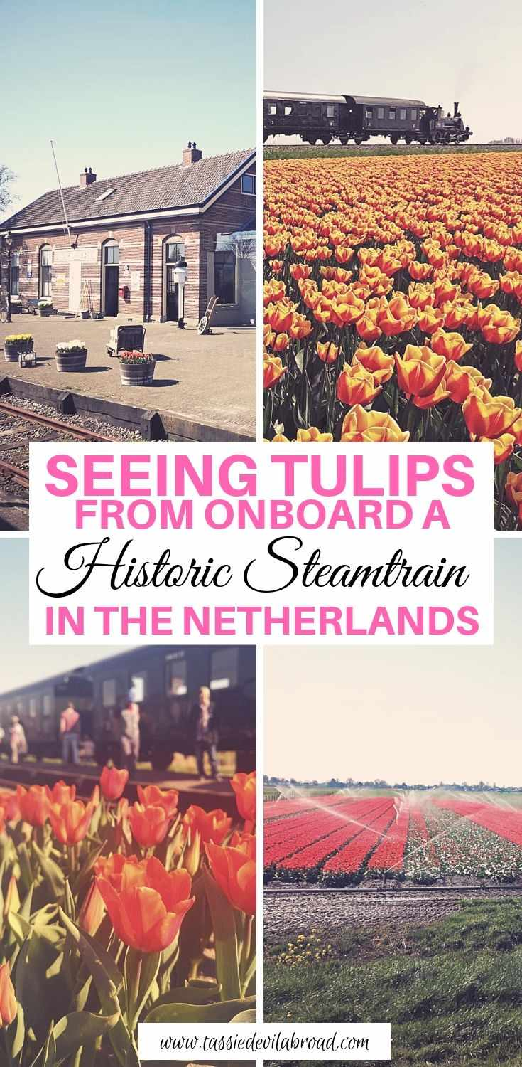 How to see tulips from onboard Holland's historic steam train #holland #tulips #travel #trains